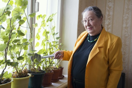Old lady in the yellow jacket at the window watering houseplant Stock Photo