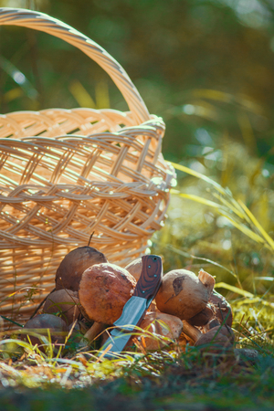 Mushrooms on grass in front of empty basket outdoors