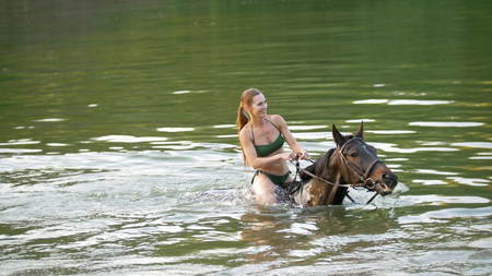 Brown horse portrait with river on the background
