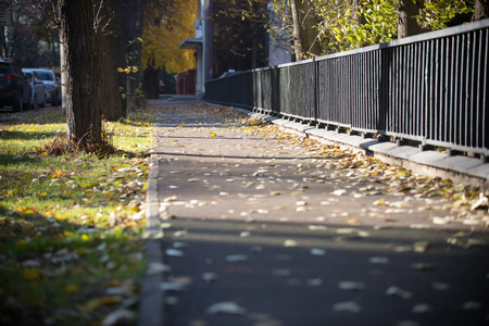 The fenced sidewalk is covered with yellow leaves. Banque d'images - 114491009