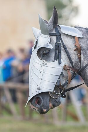 A white horse face with a protective helmet