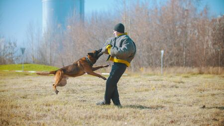 A man training his german shepherd dog - the dog clenching teeth on the hand in protective jacket Stock Photo