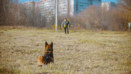 A man training his german shepherd dog - the dog sitting and waiting for the command