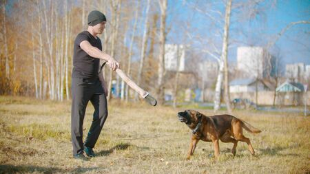 A man training his german shepherd dog on the field - incite the dog on the grip bait