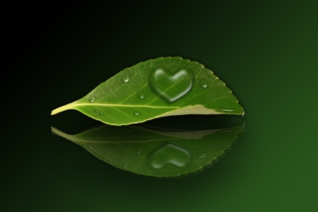 conservancy: A green leaf with a heart shape droplet on a reflecting ground  Stock Photo