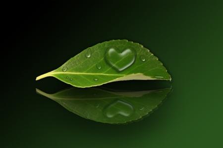 Una hoja verde con una gota en forma de corazón sobre un fondo que refleja Foto de archivo - 17613998