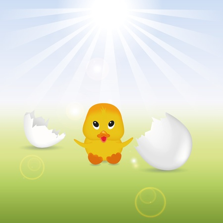 Cute little chick sitting next to broken eggshells  Vector