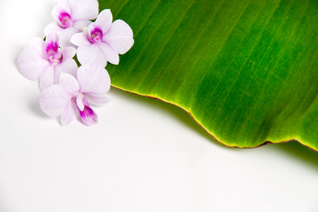 banana leaf: A beautiful orchid, four towers and banana leaf Stock Photo