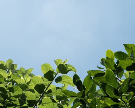 green leaves isolated 写真素材