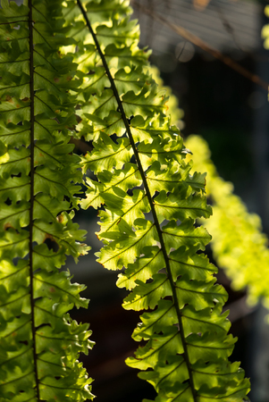 Ferns in nature light.