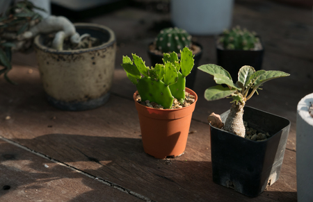 Collection of cactus in Potted, Nature light.