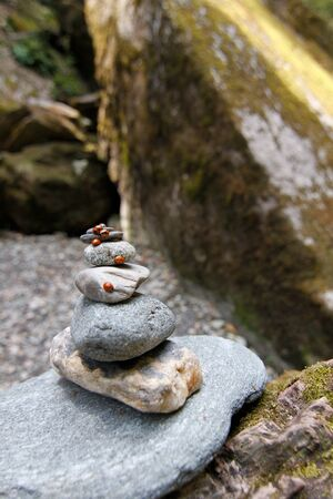 lady bug: group of lady bug on natural stone Stock Photo