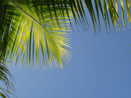 Green palm leaf in front of blue sky