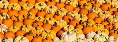 Panorama view of several small colorful pumpkins, picture-filling Stock Photo