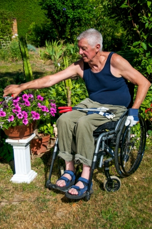 paraplegico: Jubilado en una silla de ruedas haciendo jardinería