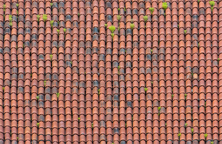 Homogeneous surface of red weathered roof tiles with light vegetation.
