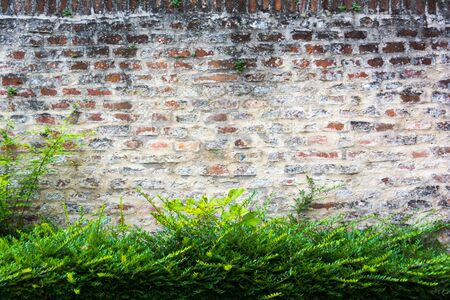 Closeup of a weathered brick wall with a green bush in front.