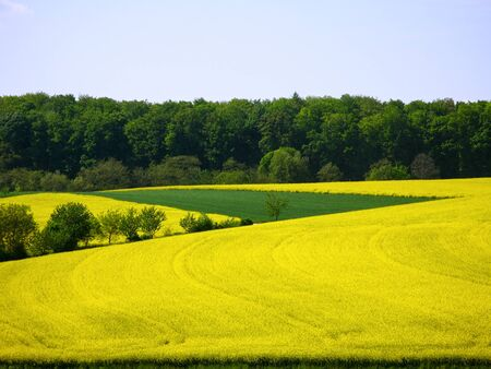 Summerly landscape with rape field and forest in the Kraichgau, Germany