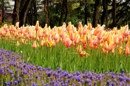 튤립 정원