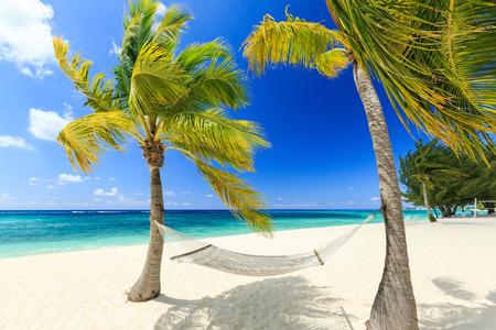 Hängematte und Palmen auf 7 Meile Strand, Grand Cayman Standard-Bild - 34509071