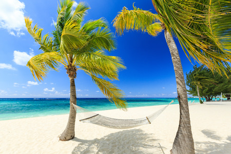 island: Hammock and palm trees at 7 mile beach, Grand Cayman