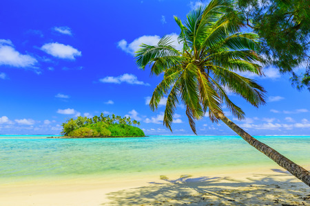 blue sea: Rarotonga, Cook Islands. Motu island and palm tree, Muri Lagoon. Stock Photo