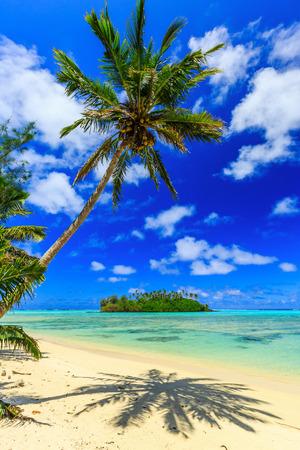 Rarotonga, Cook-Inseln. Motu Insel und Palme, Muri Lagune. Standard-Bild - 50512578
