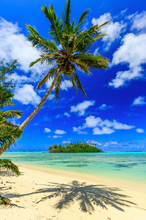 motu: Rarotonga, Cook Islands. Motu island and palm tree, Muri Lagoon. Stock Photo