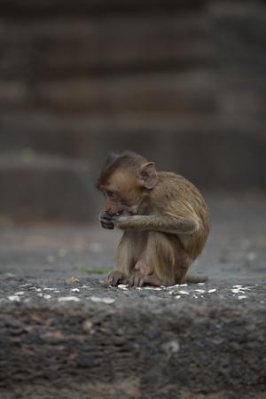 Monkeys at Prang Sam Phaya Historical Site, Lop Buri, Thailand