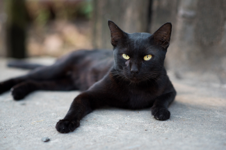 A black cat on street