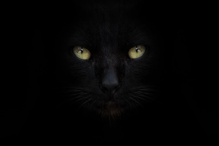 The eye of black cat on street with black background 版權商用圖片