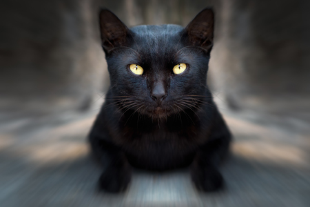 A black cat on street with zoom filter effect Imagens