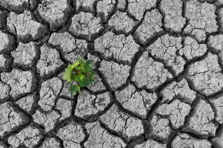 Dry cracked clay texture earth background