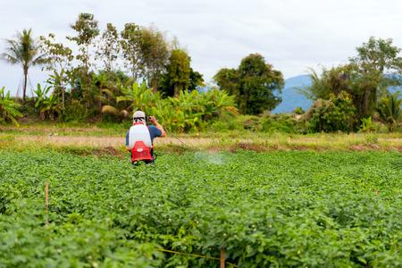 Farmer spraying of pesticide on Chili plantation
