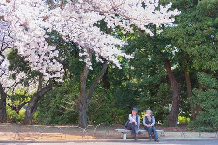 OSAKA, JAPAN - MAR 2015: Cherry blossoms (Sakura) tree at Shinjuku Gyoen National Garden or traditional leisure activity in Japan