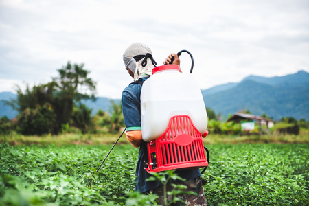 Farmer spraying of pesticide on Chili plantation Banque d'images