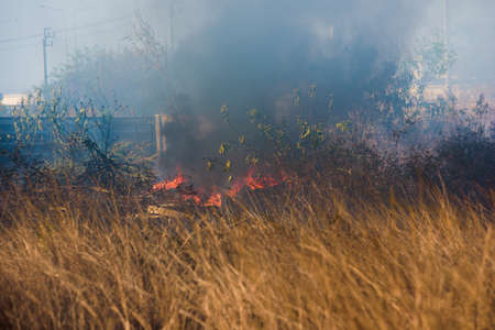 Fire flame burning garbage spreads over the grassy forest while emitting smoke air pollution, Air pollution concept. Focusing on bonfire. 免版税图像