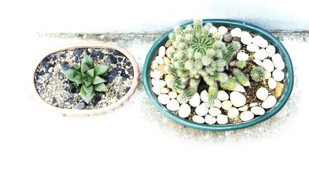 types of cactus: Different cactus in two pots style background Stock Photo