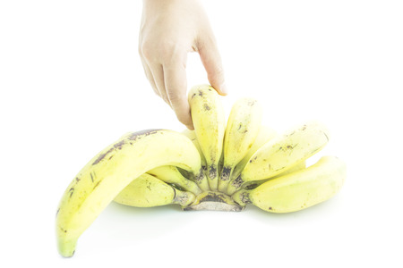 ripened: Over ripened bananas nature color skin with hand pick on white background