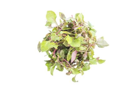 watercress: Red green watercress salad ingredient top view on white background