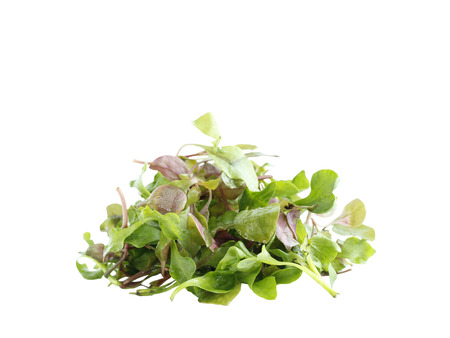 berros: Red green watercress organic salad ingredient on white background Foto de archivo
