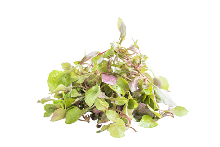 berro: Verde rojo ensalada de berros frescos ingredientes en el fondo blanco
