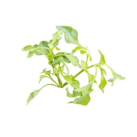 berros: Fresco ingrediente verde ensalada de hojas de berro en el fondo blanco Foto de archivo