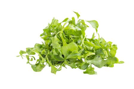 berro: Orgánica ingrediente ensalada de berros verde sobre fondo blanco