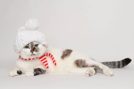 Pretty cat in a white hat with a pompom and striped scarf
