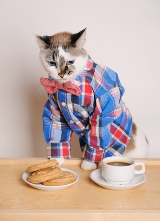 Cat in a shirt and bow tie drinking morning coffee with cookies