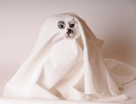 Blue-eyed white cat dressed as ghost in sheet with slits for the eyes and nose. Light background, isolated
