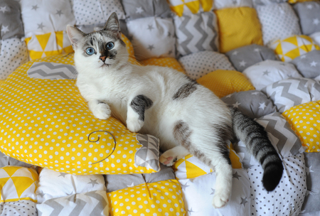 Blue-eyed white cat on the textile blanket with pillow elephant