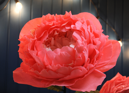 Huge growth gentle flower peony paper closeup. Blue wall on background Standard-Bild