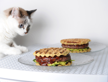 White blue-eyed cat is tasting burger with beef chops, guacamole, cherry sauce, potato bun on grill. White background